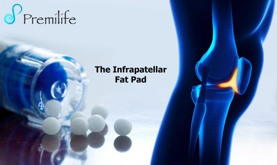 The-Infrapatellar-Fat-Pad