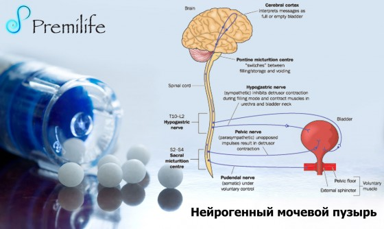 Neurogenic-Bladder-russian