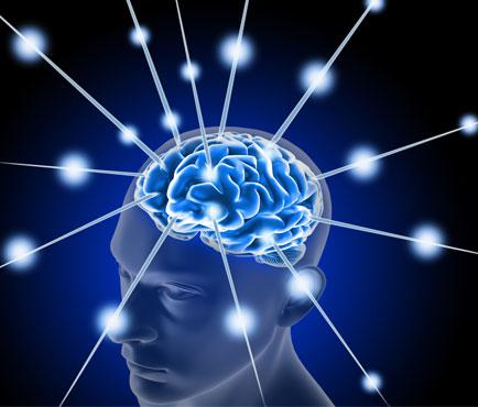 Cerebro y Nervios