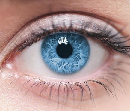Ojos y Visión