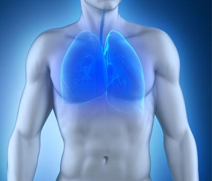 Pulmón y Vías Respiratorias